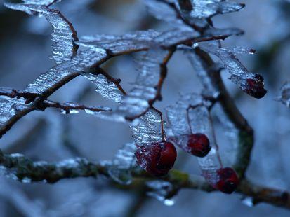 Congeladas
