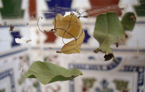 atrapadas en la tela de araña