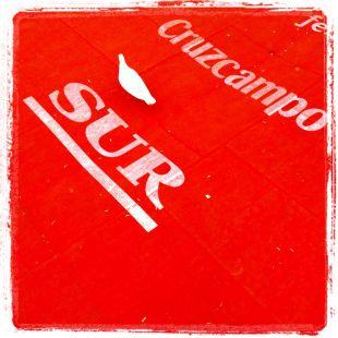 Paloma en la alfombra roja malagueña