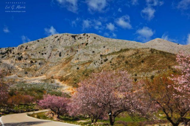 Cerezos y Almendros en Alfarnate
