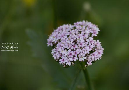 Flora del Chorro