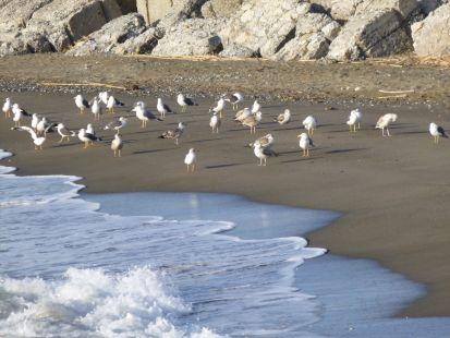 playa estepona