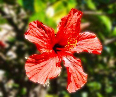 vieja flor