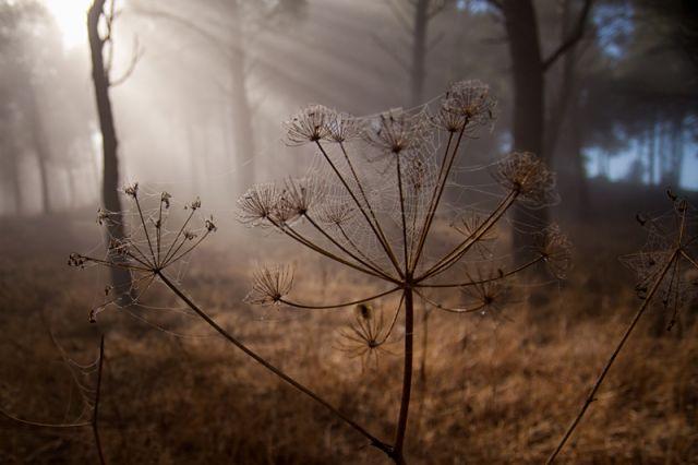 La magia del bosque