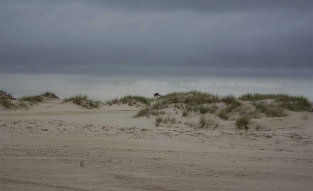 arena doñana