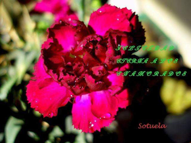¡¡¡Feliz Día de San Valentín!!!.JPG