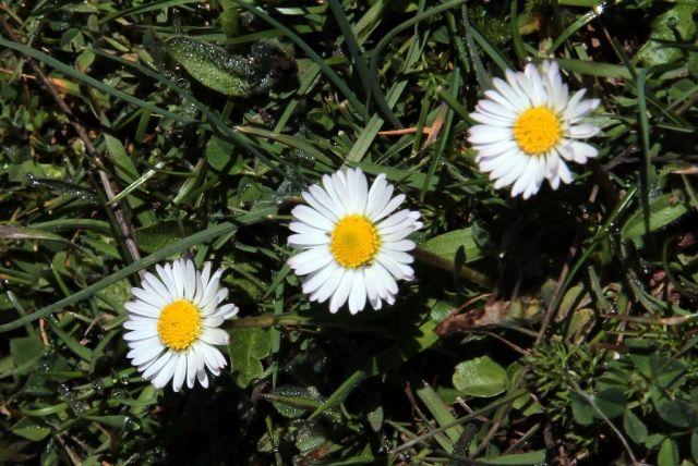 Trio primaveral