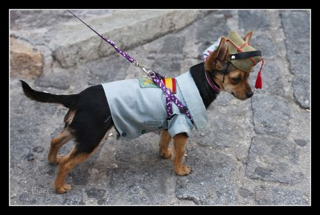 Legionario canino