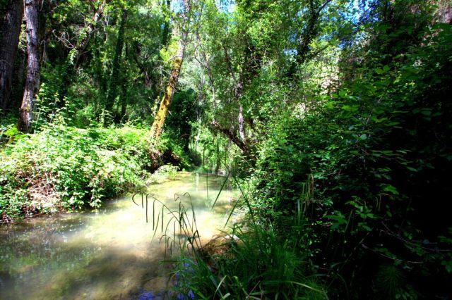 Arroyo de la Ventilla ( Arriate)