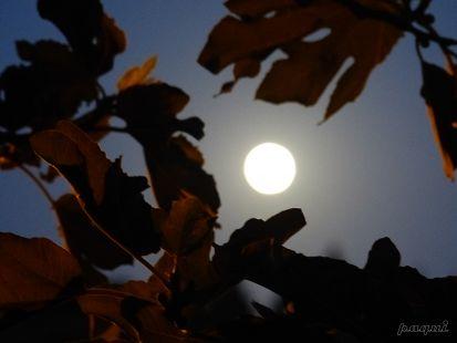 La luna a traves de mi higuera