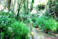 selva malaguella
