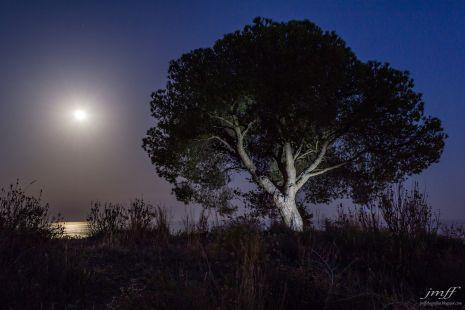 luz de luna (5)