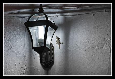 Junto a la luz