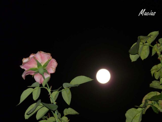 luna lunera