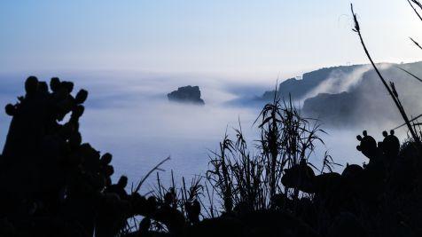 La niebla 4