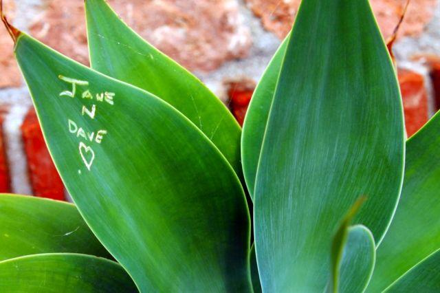 marcas de amor