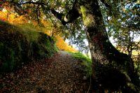 otoño en el valle del Genal