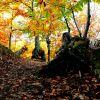 otoño en el Genal