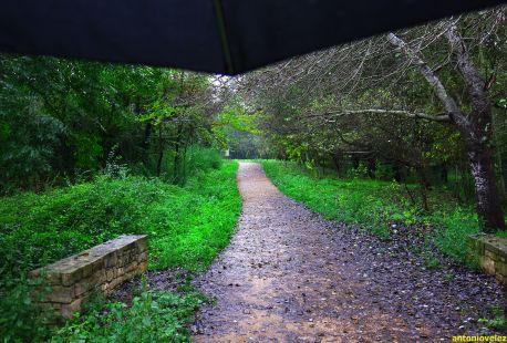 Paseo bajo la lluvia