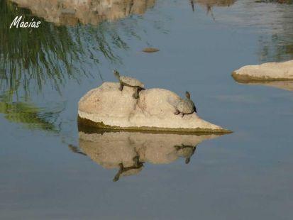 reflejos del rio
