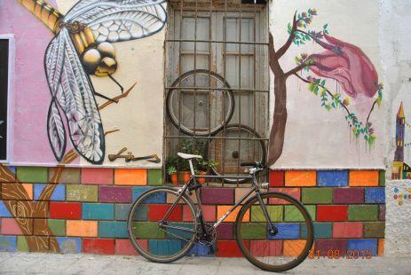 bici insectivora