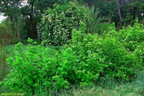 Verde de primavera